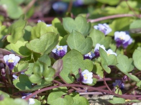 Herbs free stock photos download (287 Free stock photos) for.