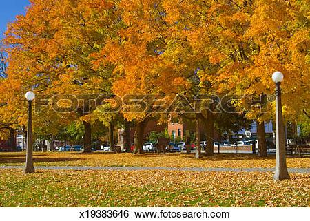 Stock Images of Fall colours at Dundonald Park, Ottawa, Ontario.