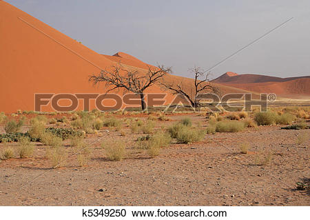 Stock Photography of Dune 45 in the Namib Desert near Sossusvlei.
