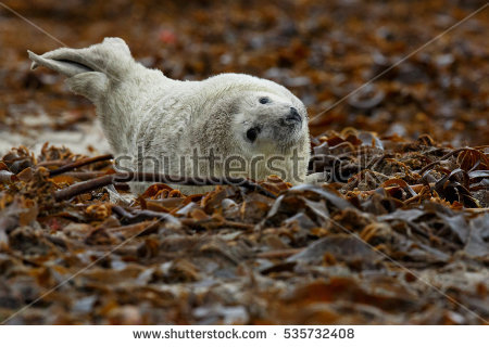 Helgoland Stock Photos, Royalty.
