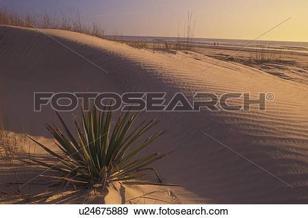 Stock Photograph of Cumberland Island National Seashore, GA.