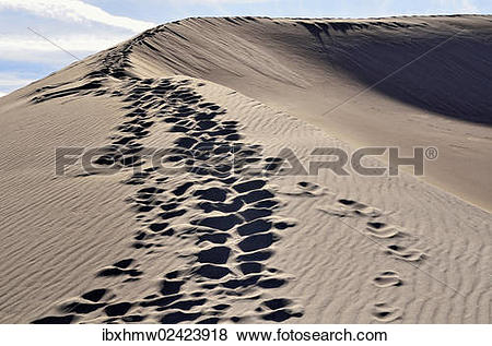 "Pictures of ""Ridge of a dune with footprints, Great Sand Dunes."