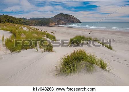 Stock Photo of Dune vegetation Wharariki Beach k17048263.