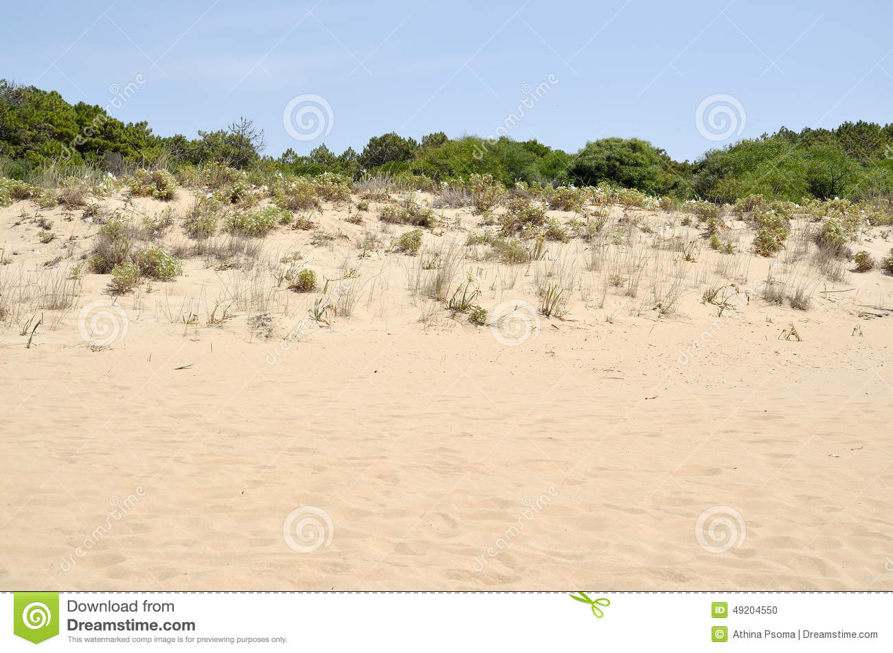 Sand Dune Vegetation Stock Photo.