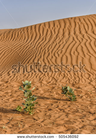 Dune Plant Stock Photos, Royalty.