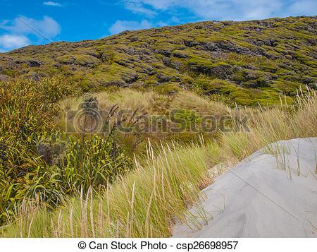 Stock Images of Various Types of Dune Vegetation Wharariki Beach.