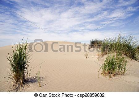 Stock Photos of Sand dunes with vegetation at Espiguette Camargue.