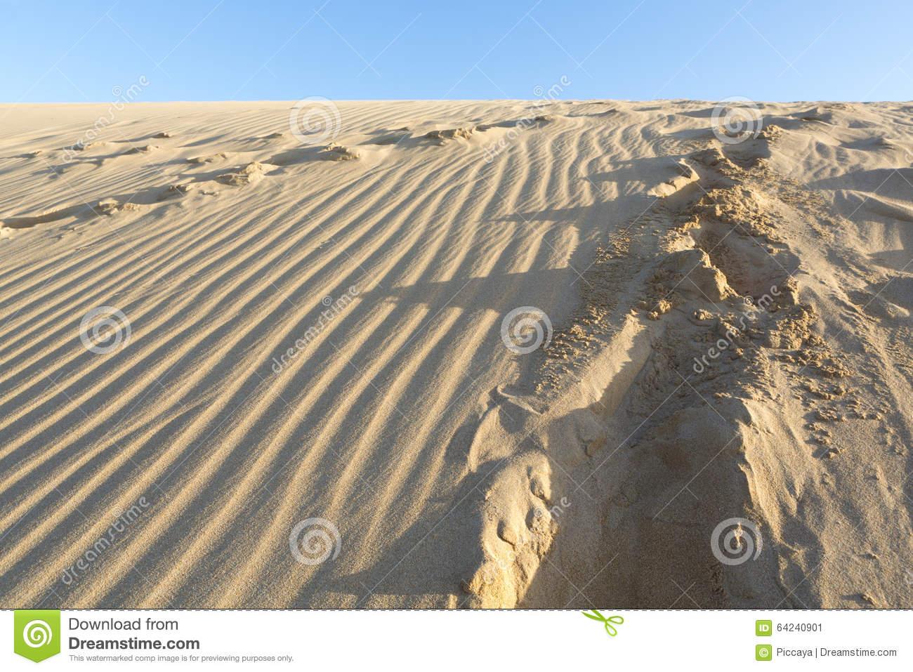 Wild Dune Rose Collage Stock Photos.
