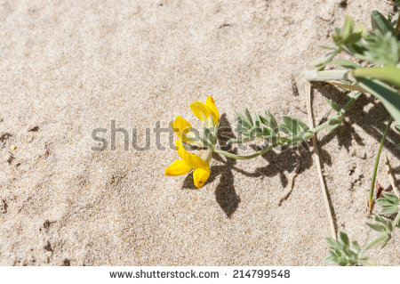 Coastal Dunes Stock Photos, Royalty.