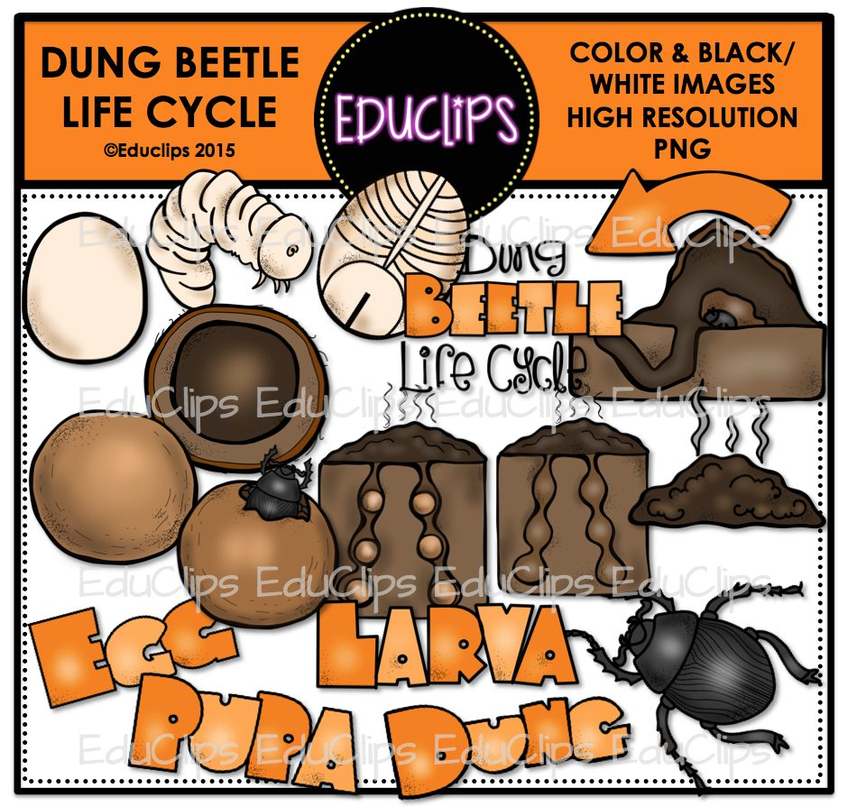 Dung Beetle Life Cycle Clip Art Bundle (Color and B&W).