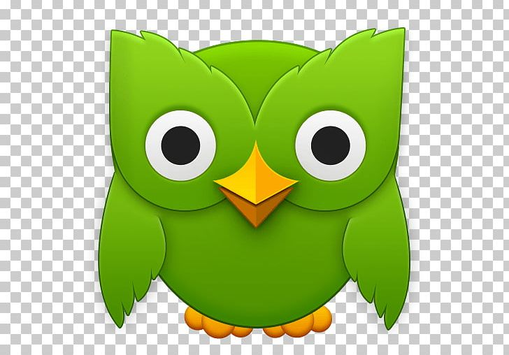 Duolingo Foreign Language Learning Language Acquisition PNG, Clipart.