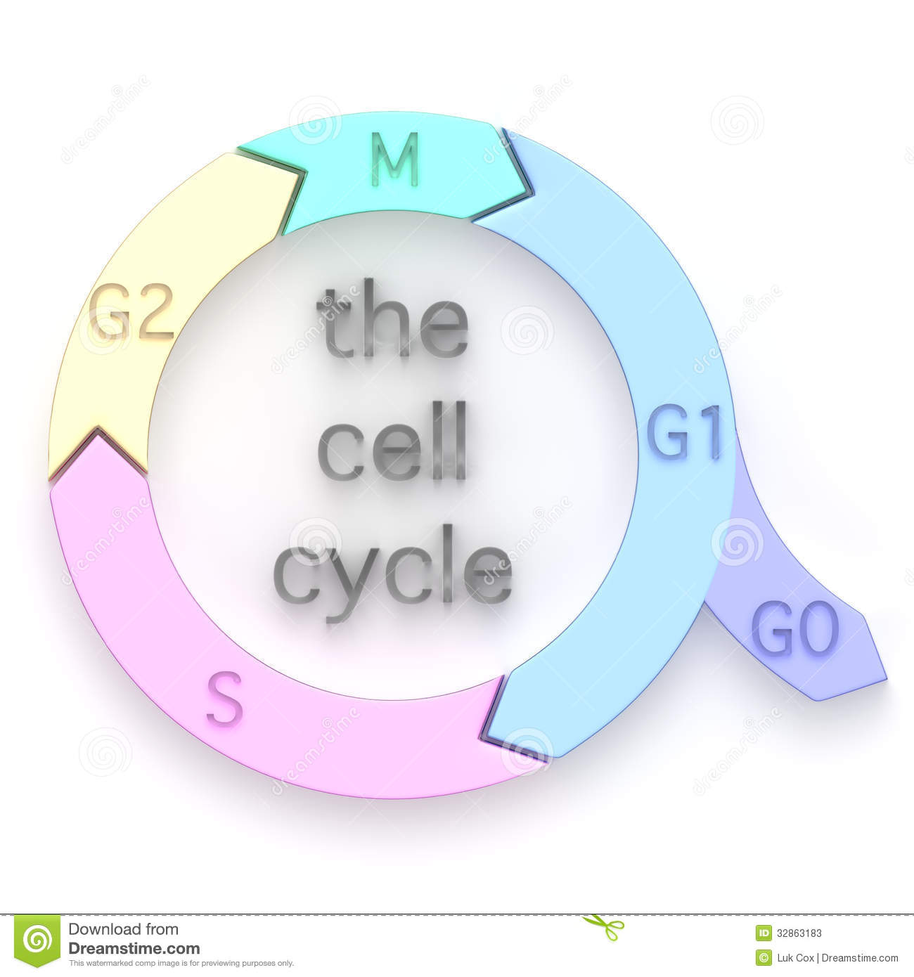 Diagram Of The Cell Cycle Stock Photos.