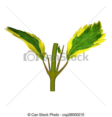 Clipart of Duranta is a genus of flowering plants in the verbena.