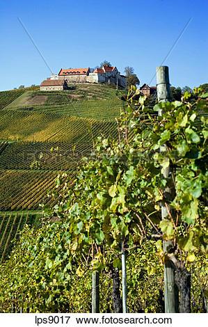Picture of vineyard and staufenburg castle durbach baden.