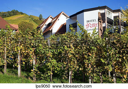 Stock Photography of vineyard and ritter hotel restaurant durbach.