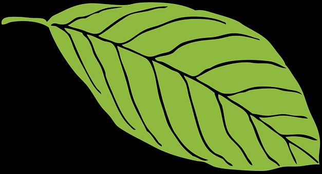 Chlorophyl.