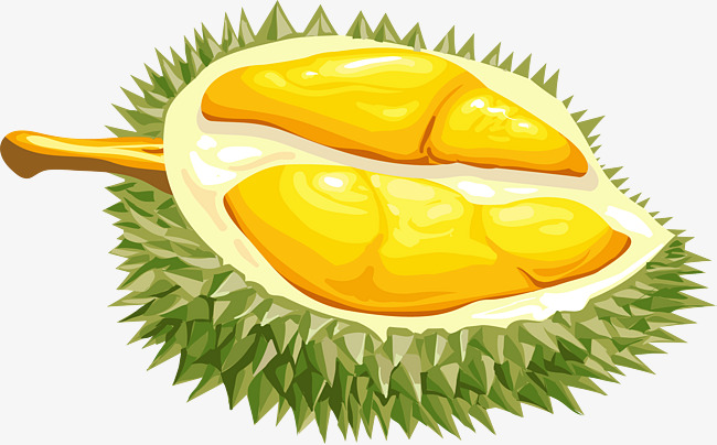 Durian Vector at GetDrawings.com.
