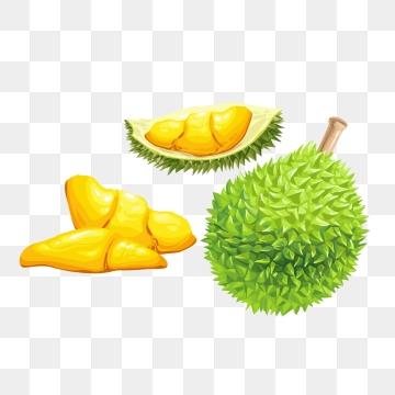 Durian Cartoon PNG Images.