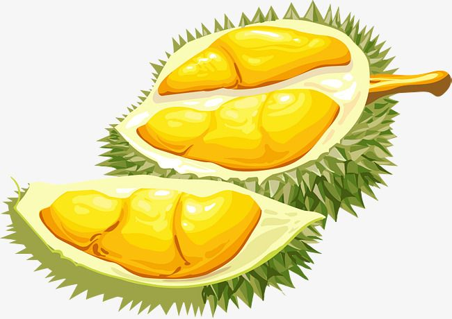 Open Durian, Durian Fruit, Decorate PNG and Vector with Transparent.
