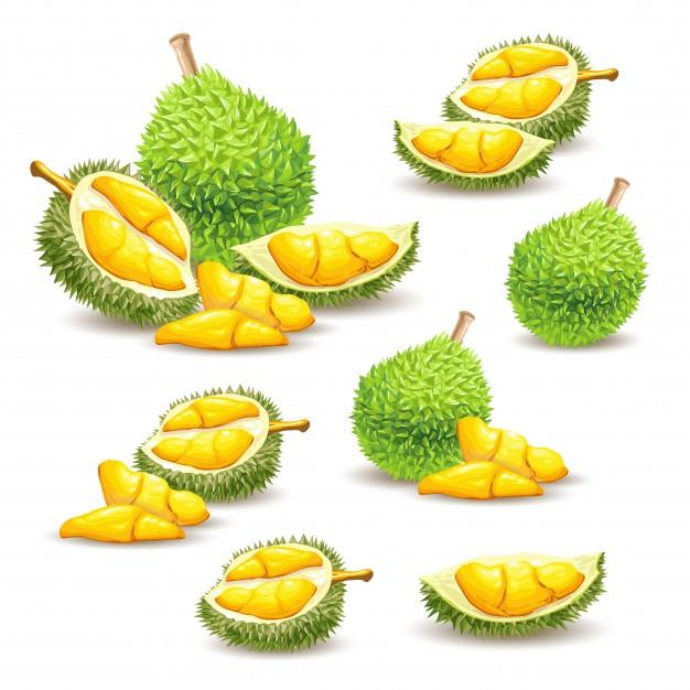 Durian Vectors, Photos and PSD files.