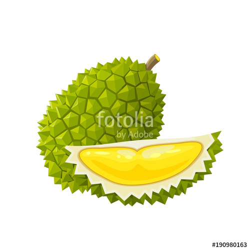 Summer tropical fruits for healthy lifestyle. Durian, whole fruit.