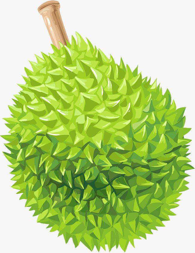 Cartoon Complete Durian, Cartoon Vector, Durian, Fruits PNG and.