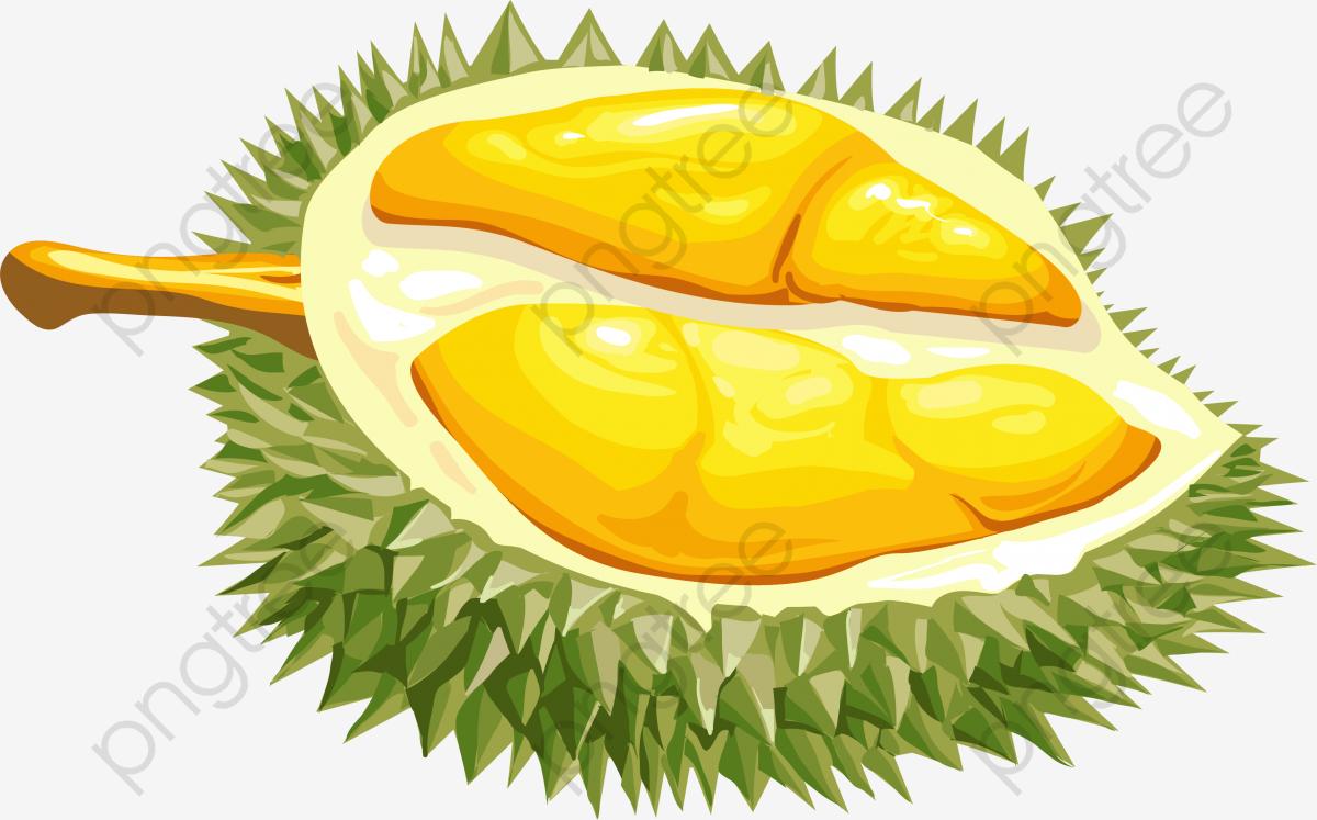 Cartoon Fresh Durian, Durian Fruit, Cartoon, Vector Pattern PNG and.