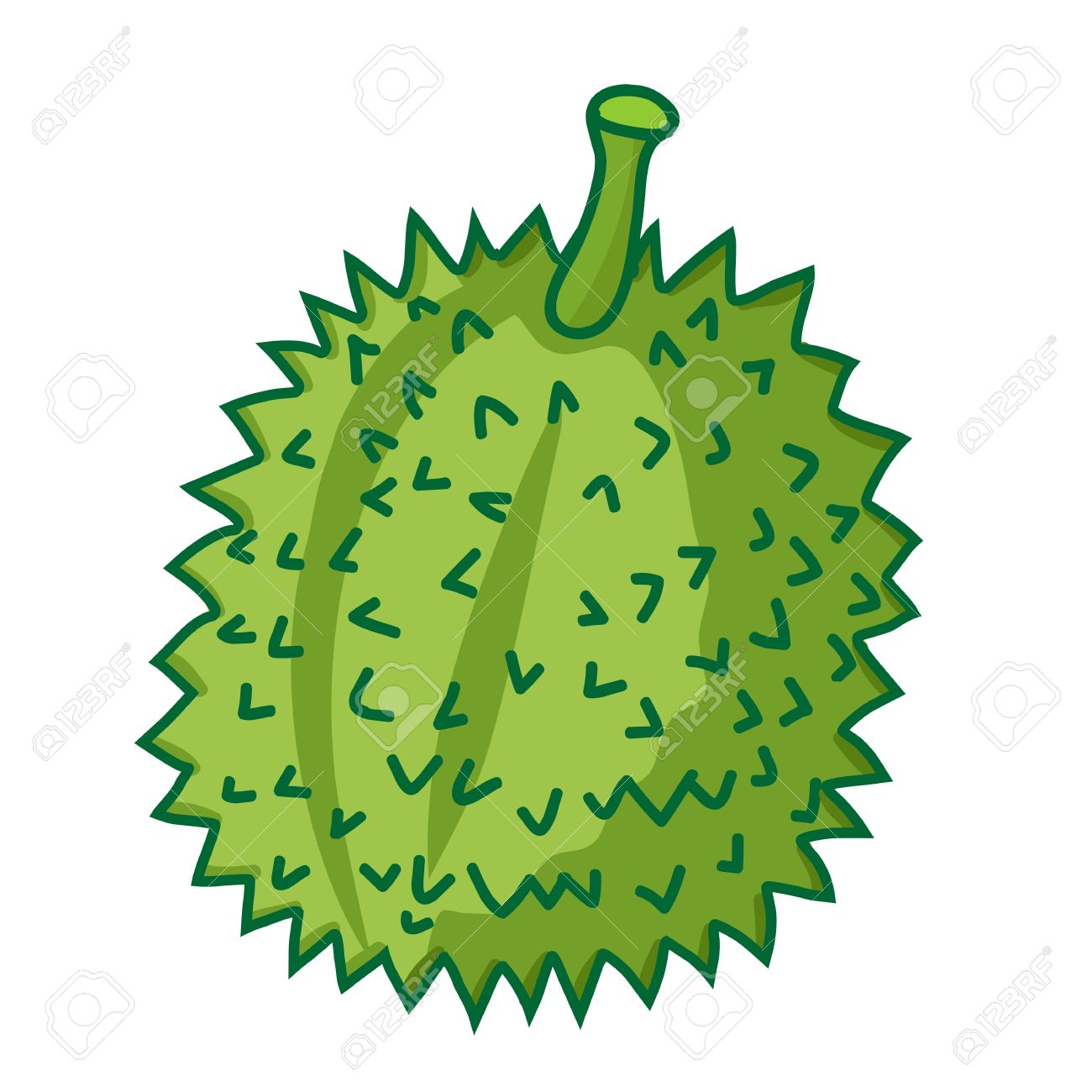 Durian The Tropical Fruit Isolated Illustration On White.