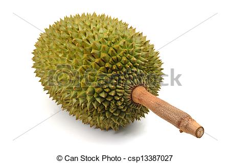 Durian Stock Illustrations. 382 Durian clip art images and royalty.