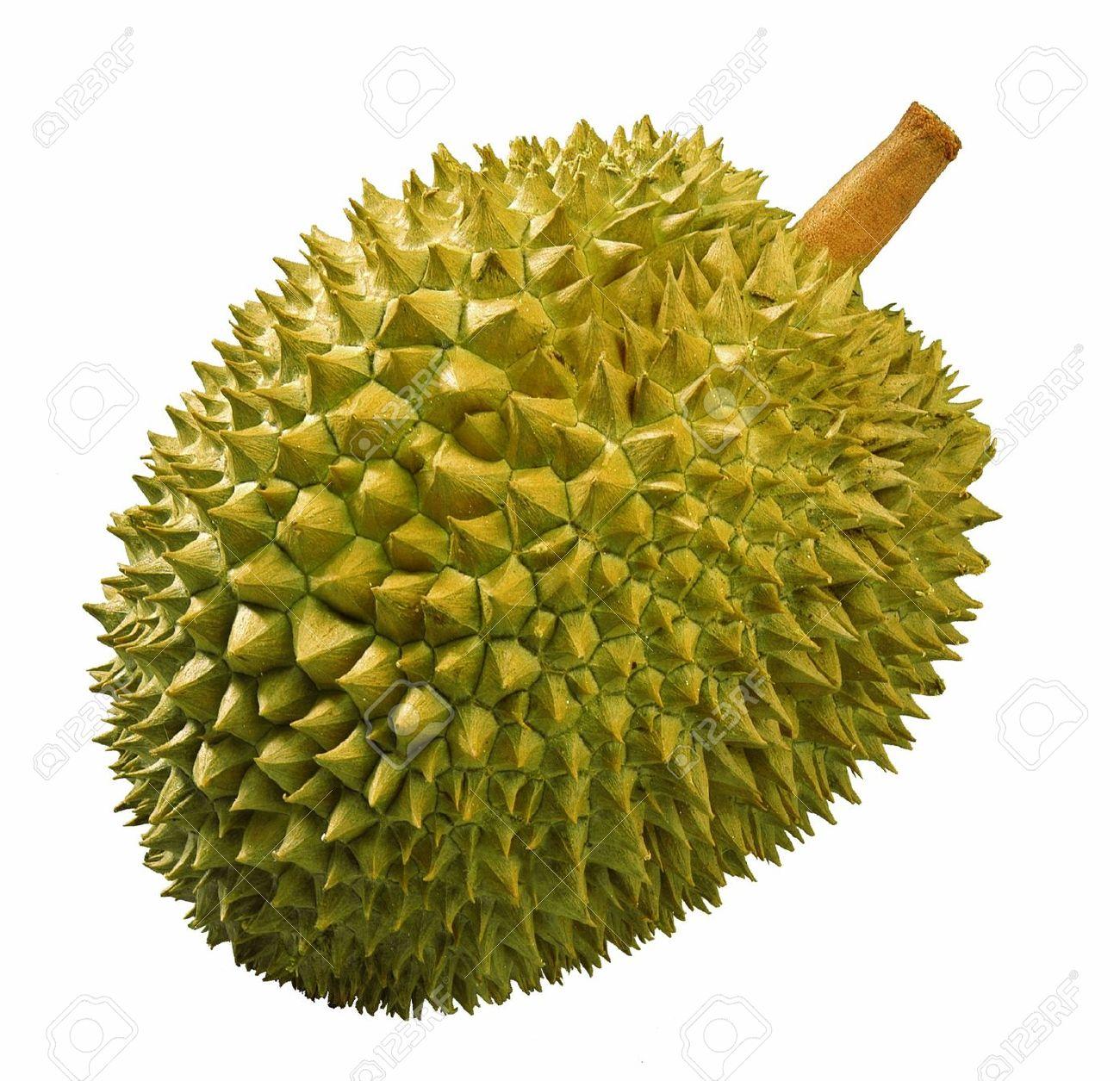 Clipart durian.