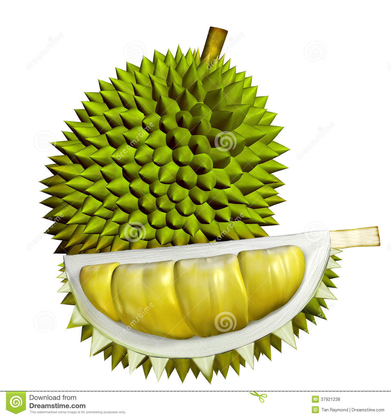 Durian Stock Illustrations.