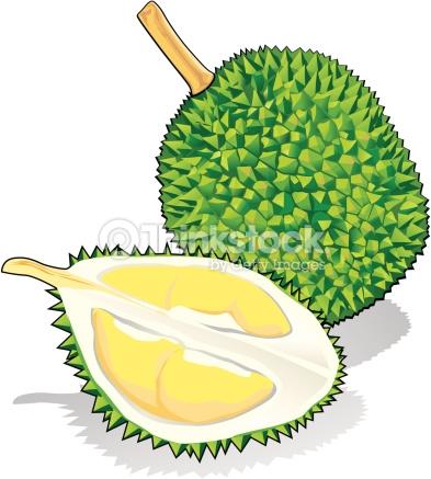 Durian Vector Art.