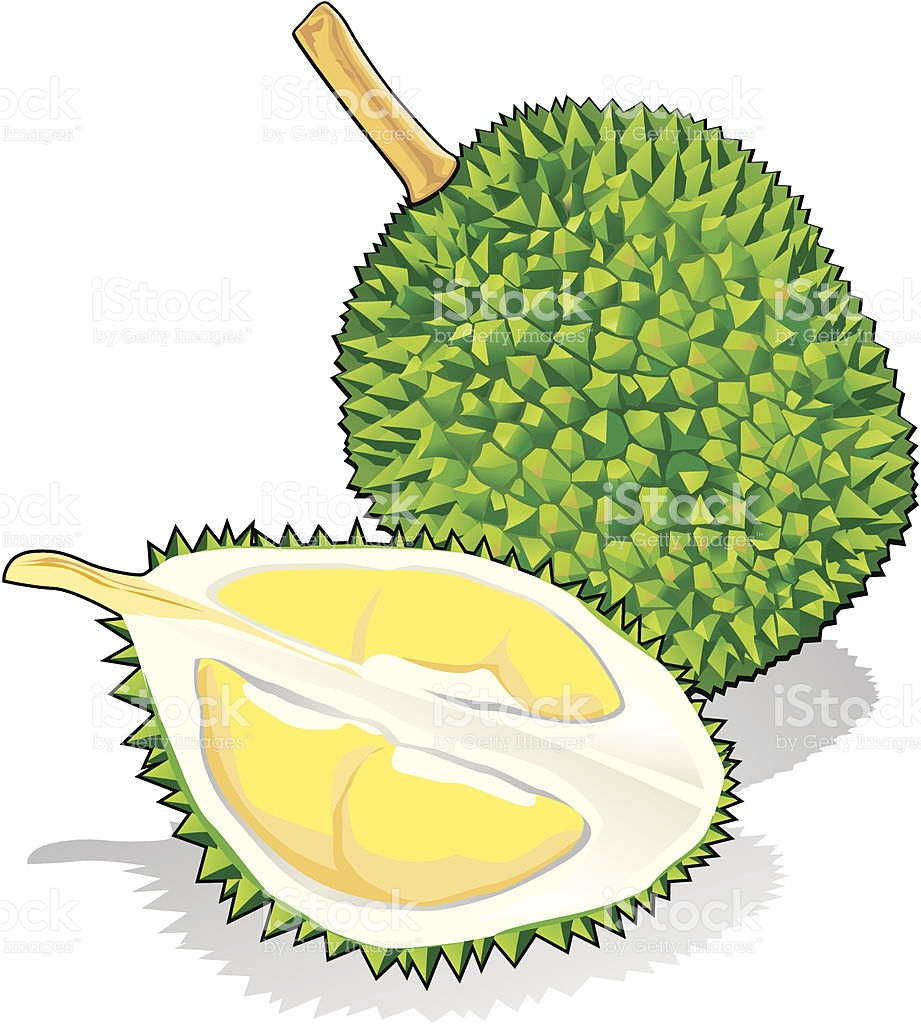 Durian clipart 3 » Clipart Station.