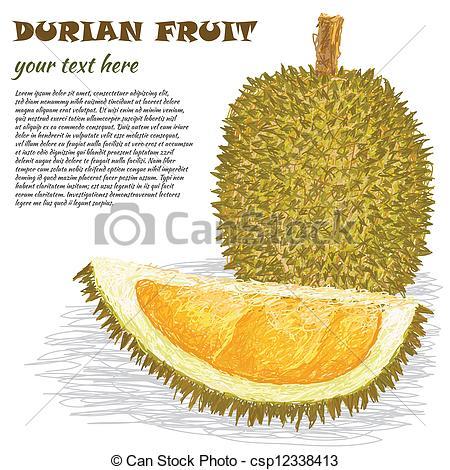 Durian fruit Vector Clip Art EPS Images. 329 Durian fruit clipart.