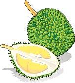 Durian Fruit Clip Art Download 728 clip arts (Page 1.