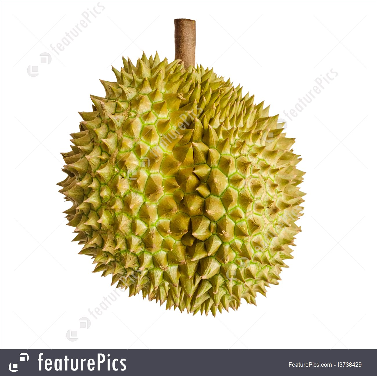 Picture Of Durian Fruit.