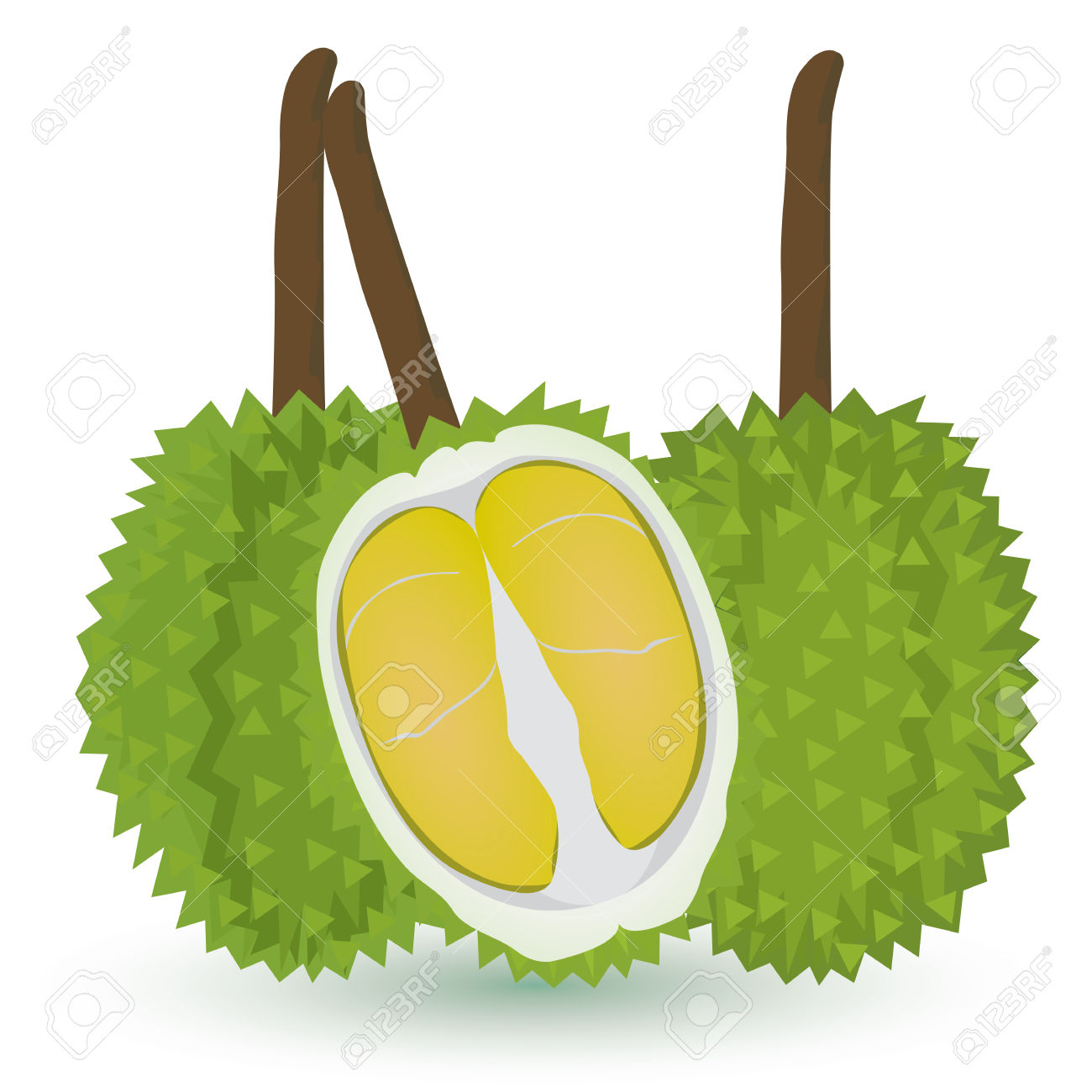Durian Fruit Vector Design Royalty Free Cliparts, Vectors, And.