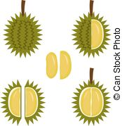 Durio Stock Illustrations. 4 Durio clip art images and royalty.