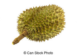 Stock Image of Durian.