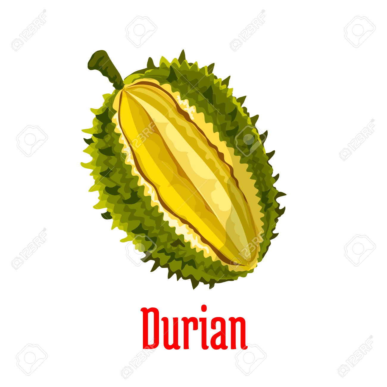 Durian. Vector Isolated Exotic Tropical Durian Fruit Icon. Durio.