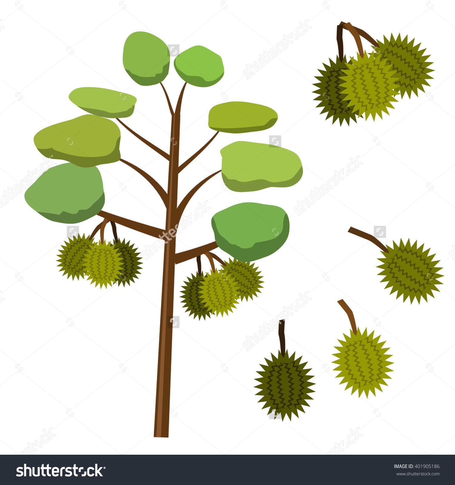Durian Fruit On Durian Tree Flat Stock Vector 401905186.