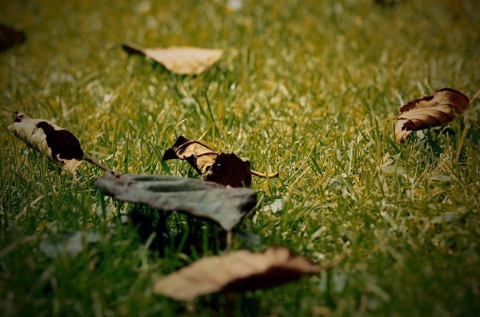 Free photo Grass Leaves Leaf Garden Dry Durres Batt.