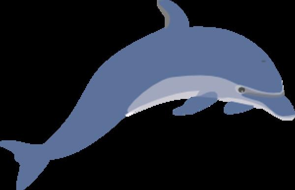 Animated Dolphin.