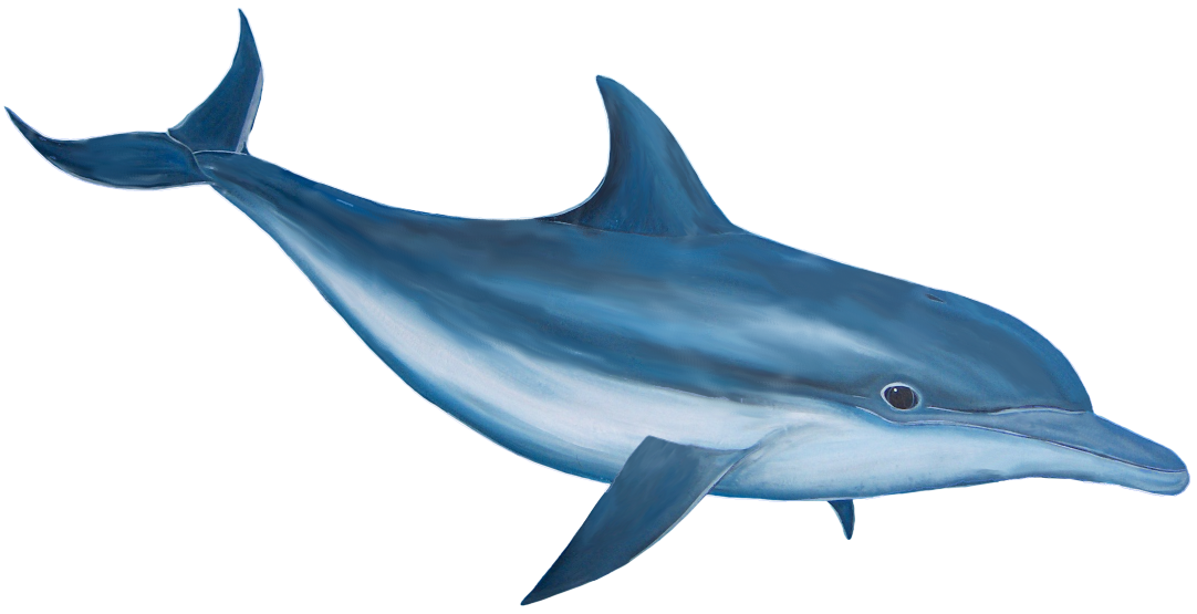 46 units of Dolphin Images.