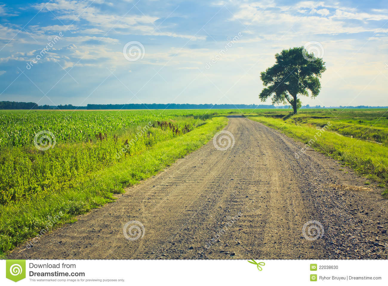 Dusty Road With Alone Tree Stock Photo.