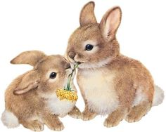 Wallpaper super cute kawaii pet love dwarf bunny rabbit.