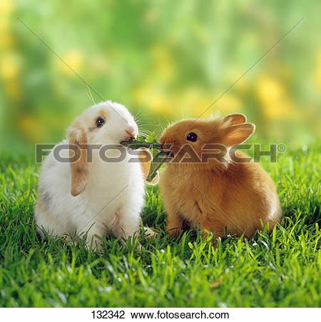 Stock Photo of lop.