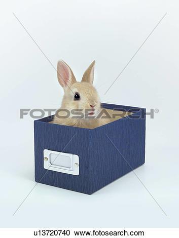 Dwarf rabbit Stock Photos and Images. 2,196 dwarf rabbit pictures.