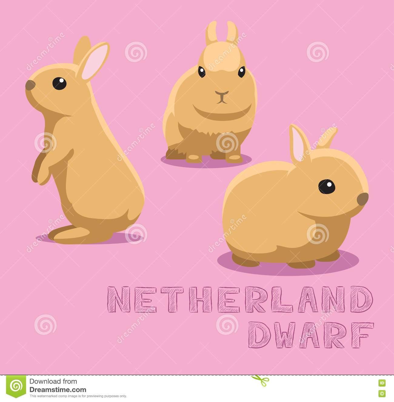 Dwarf Rabbit Stock Illustrations.
