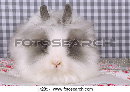 Picture of Dwarf Rabbit. Mixed.